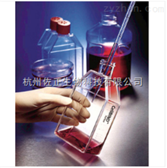 fisher透气盖斜颈培养瓶3013290