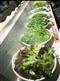 超市蔬菜保鲜加湿设备多少钱